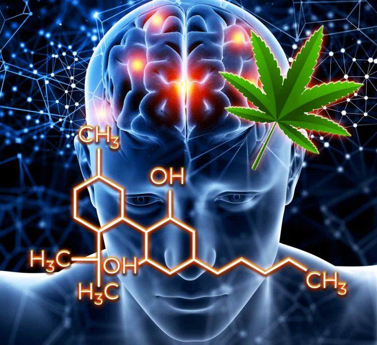 LE CBD dan le traitement de l'épilepsie